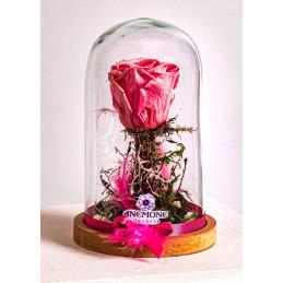 Trandafir criogenat in cupola