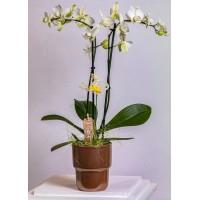 Plante naturale