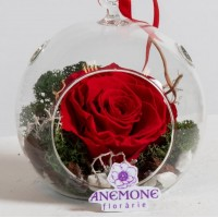 Trandafiri criogenati - Floraria Anemone